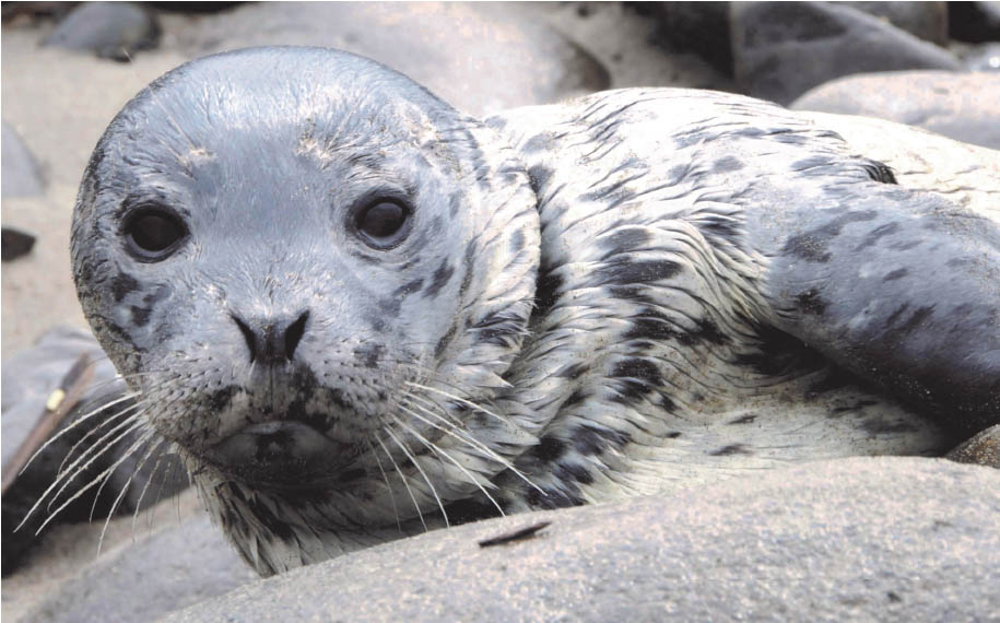 Seal Pups Closeup