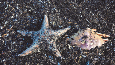 SEA STARS AND CRABS