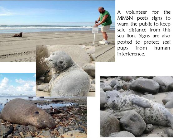 Marine Mammals on Local Beaches