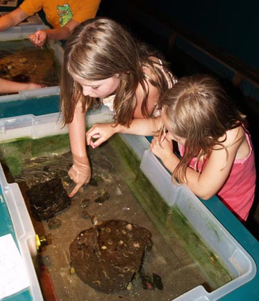 Touch Tank with Small Tanks