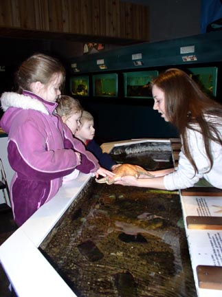 Touch Tank with Starfish